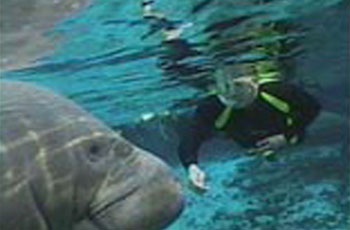 manatee snorkel tour package